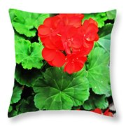 Austrian Red Throw Pillow