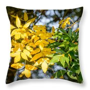 Autumn Ash Tree Leaves Under The Sun Throw Pillow