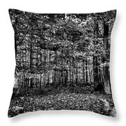 Autumn At Mccauley Mountain IIi Throw Pillow