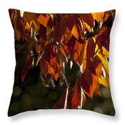 Autumn Beech Leaves Throw Pillow