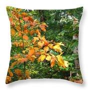Autumn Begins At Breakheart Reservation Throw Pillow