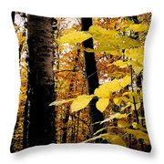 Autumn Birch Trees Throw Pillow
