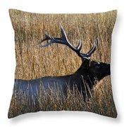 Autumn Bull Elk In Yellowstone National Park Throw Pillow