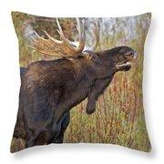 Autumn Bull Moose II Throw Pillow