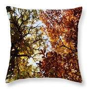 Autumn Chestnut Canopy   Throw Pillow