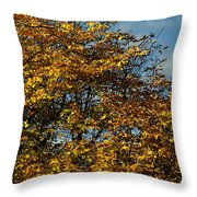 Autumn Colors 5 Throw Pillow