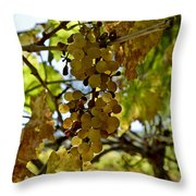 Autumn Colors In Wine Country Throw Pillow by Patricia Sanders