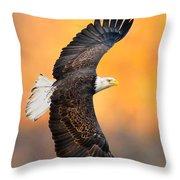 Autumn Eagle Throw Pillow