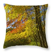 Autumn Forest Scene In West Michigan Throw Pillow