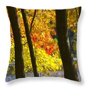 Autumn Forest Scene Throw Pillow