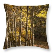 Autumn Forest Scene With Birches In West Michigan Throw Pillow