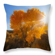 Autumn Golden Birch Tree In The Sun Fine Art Photograph Print Throw Pillow