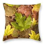 autumn is coming 5 - A carpet of autumn color leaves  Throw Pillow