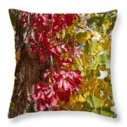 Autumn Leaves In Palo Duro Canyon 110213.97 Throw Pillow