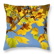 Autumn Leaves Of The Tulip Tree Throw Pillow