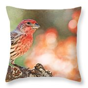 Autumn Male House Finch 1 Throw Pillow