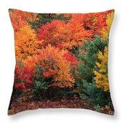 Autumn Maple Trees Throw Pillow