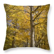 Autumn Orange Forest Colors At Hager Park No.1189 Throw Pillow