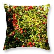 Autumn Splendor 5 Throw Pillow