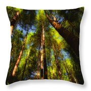 Autumn Sunlight Cast On Majestic Green Oregon Old Growth Forest  Throw Pillow