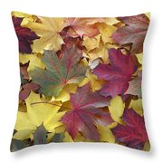 Autumn Sycamore Leaves Germany Throw Pillow