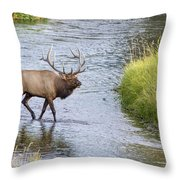 Autumn Traveler Throw Pillow