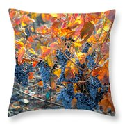 Autumn Vineyard Sunlight Throw Pillow
