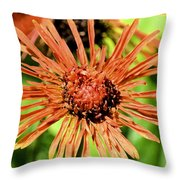 Autumn's Gerber Daisy Throw Pillow