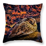 Autumns Sleepy Duck Throw Pillow