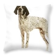 Auvergne Pointer Throw Pillow