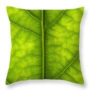Avocado Leaf Throw Pillow