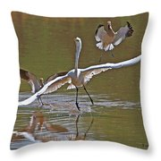 Avocets Chase Off The Egret Throw Pillow