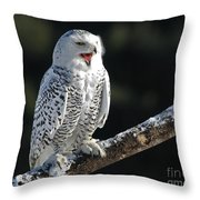 Awakened- Snowy Owl Laughing Throw Pillow by Inspired Nature Photography Fine Art Photography