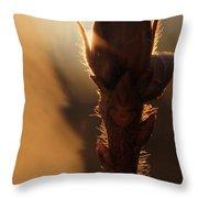 Azalea Flower Bud Sunrise - 1 Throw Pillow