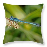Azure Damselfly  Throw Pillow