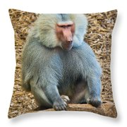Baboon On A Stump Throw Pillow