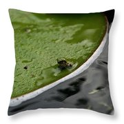 Baby Amphibian Throw Pillow