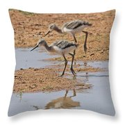 Baby Avocets At Grp Throw Pillow