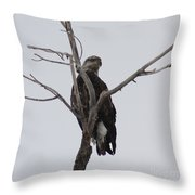 Baby Bald Eagle Throw Pillow