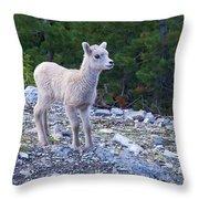 Baby Big Horn Sheep Throw Pillow
