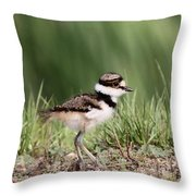 Baby - Bird - Killdeer Throw Pillow