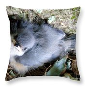 Baby Bird Learns A Lesson Throw Pillow