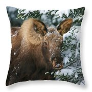 Baby Blue Eyes Throw Pillow