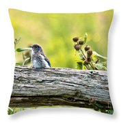 Baby Bluebird Throw Pillow