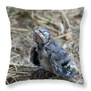 Baby Blue Jay Throw Pillow
