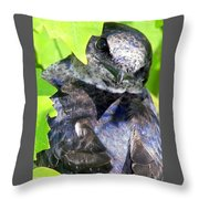 Baby Bluejay Peek Throw Pillow by Karen Wiles
