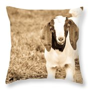 Baby Boer Goat Throw Pillow
