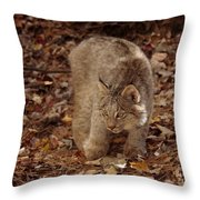Baby Canada Lynx In An Autumn Forest Throw Pillow