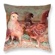 Baby Chicks Under Heat Lamp Art Prints Throw Pillow
