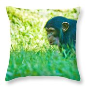 Baby Chimp In The Grass Throw Pillow